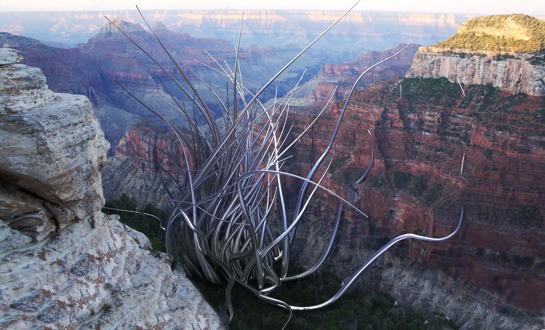 Invasion: North Rim Grand Canyon